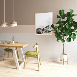 Fiddle-leaf Fig H185