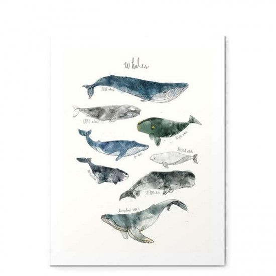 Whales - Small