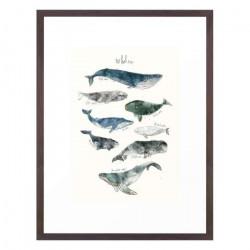 Sharks - Medium [Display]