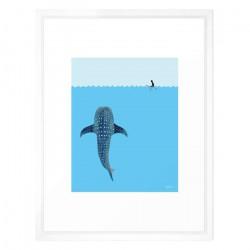 Whale Shark - Medium