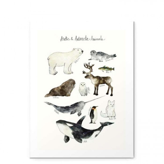 Arctic & Antarctic Animals - Small