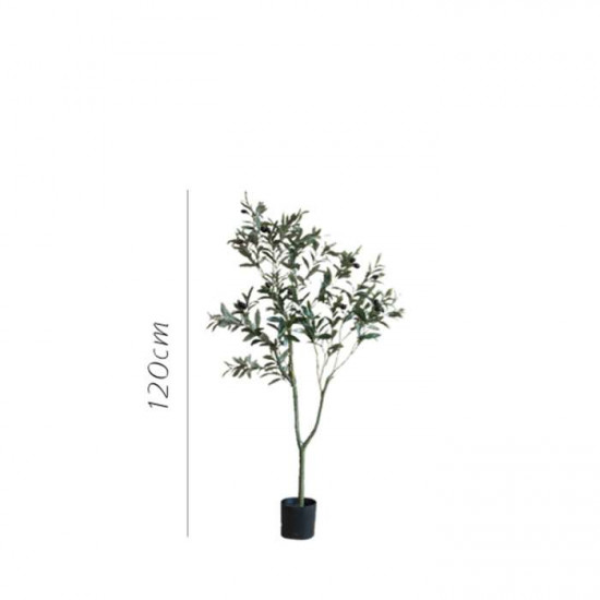 The Olive Tree H120