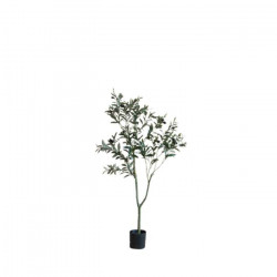 The Olive Tree H120 [Display]