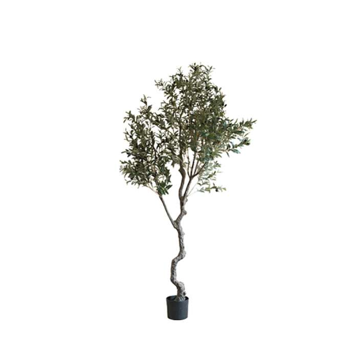 The Olive Tree H240