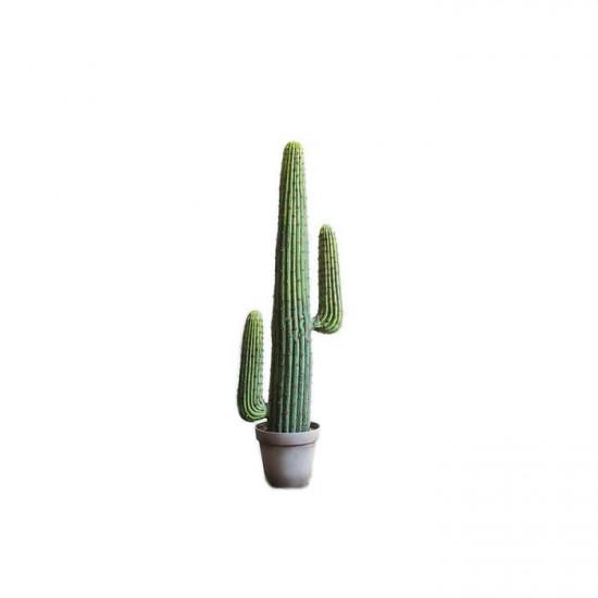 Mexica Espostoa H123