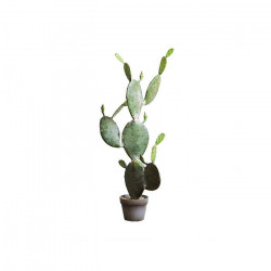Opuntia H105