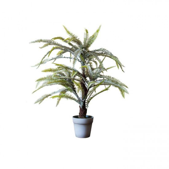 Boston Fern H56/H75
