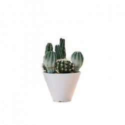 Succulent plants A [Display]