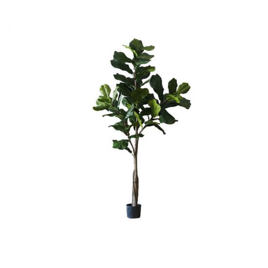 Fiddle-leaf Fig H185