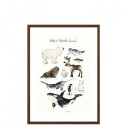 Arctic & Antarctic Animals - Medium [Display]